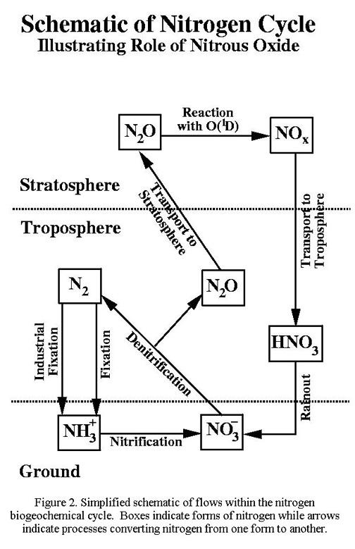 Ozone chapter 10 figure 1002 nitrogen biogeochemical cycle diagram 1002 ccuart Choice Image